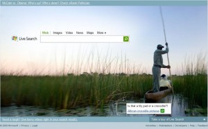 Windows Live Search in Africa